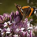 Butterfly Close Up by Stwayne Keubrick