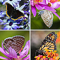 Butterfly Collage  by Heidi Smith