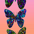 Butterfly Collage IIII by Robert Meanor