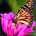 Butterfly Cup by Elizabeth Winter