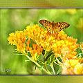 Butterfly by Diane Hagler