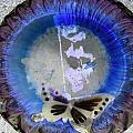 Butterfly by Dietrich ralph  Katz