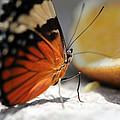 Butterfly by Dmitry Spiros