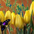 Butterfly Dreams by Garry Gay
