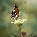 Butterfly Dreams by Kim Hojnacki