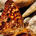 Butterfly Enchantment by Constance Hessman