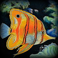 Butterfly Fish by Antonia Citrino