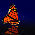 Butterfly Floats by Robert Schwarztrauber