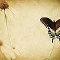 Butterfly Flower by Kim Henderson