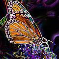 Butterfly Garden 24 - Monarch by E B Schmidt