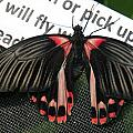 Butterfly Garden by Carol Ailles