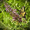 Butterfly Garden by Sennie Pierson