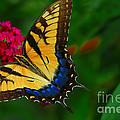 Butterfly by Geraldine DeBoer