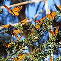 Butterfly Goodbye by Craig Corwin
