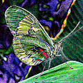 Butterfly Green by Janet Maloy
