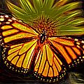 Butterfly I by Carlos Diaz