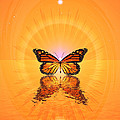 Butterfly II by Harald Dastis