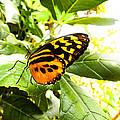 Butterfly II by Jennifer Niehaus