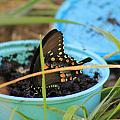 Butterfly In A Cup by Robin Vargo