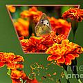 Butterfly In A Sea Of Orange Floral 02 by Thomas Woolworth