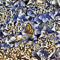 Butterfly In Blue by Darryl Gibbs