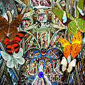 Butterfly In Cappella Sistina Sistinechapel by Joseph Mosley