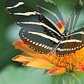Butterfly In Motion #1968 by Olivia Novak