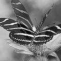 Butterfly In Motion by Olivia Novak