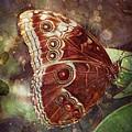 Butterfly In My Garden by Barbara Orenya