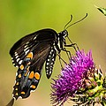 Butterfly In Nature by Daren Johnson