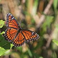 Butterfly In The Everglades by Christiane Schulze Art And Photography