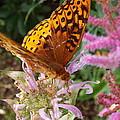 Butterfly In The Garden by Cheryl King