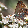 Butterfly In The Garden by Todd Blanchard