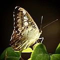 Butterfly In The Light by Linda Morland