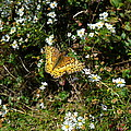 Butterfly by Two Bridges North