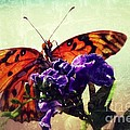 Butterfly Kissed by Darla Wood