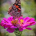 Butterfly Kisses by Elizabeth Winter