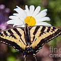 Butterfly Kisses by Omaste Witkowski