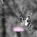 Butterfly Landing by Jessica Davis
