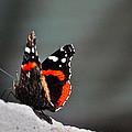 Butterfly Landing by Kristina Deane