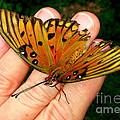 Butterfly Landing by Paul Wilford