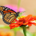 Butterfly Lunch by Lorna R Mills DBA  Lorna Rogers Photography