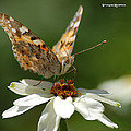 Butterfly Macro Photography by Stwayne Keubrick