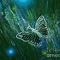 Butterfly Magic By Jrr by First Star Art