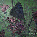Butterfly by Mando Xocco