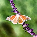 Butterfly - Monarch - Photopower 319 by Pamela Critchlow