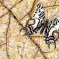 Butterfly Mosaic 01 Elena Yakubovich by Elena Yakubovich