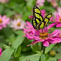 Butterfly On A Flower by Leah Palmer