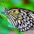 Butterfly On A Leaf by Nick  Biemans