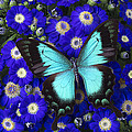 Butterfly On Cineraria by Garry Gay